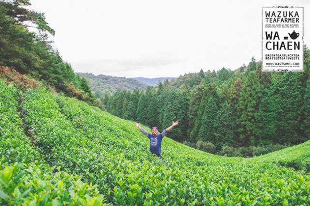 山形市フレーバー緑茶専門店フレーバーグリーンのフレーバー緑茶で使用している茶葉を生産している和茶園