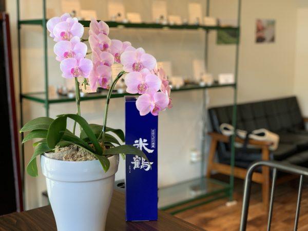 山形市宮町の花凛さんから頂いた胡蝶蘭│フレーバー緑茶専門店フレーバーグリーン