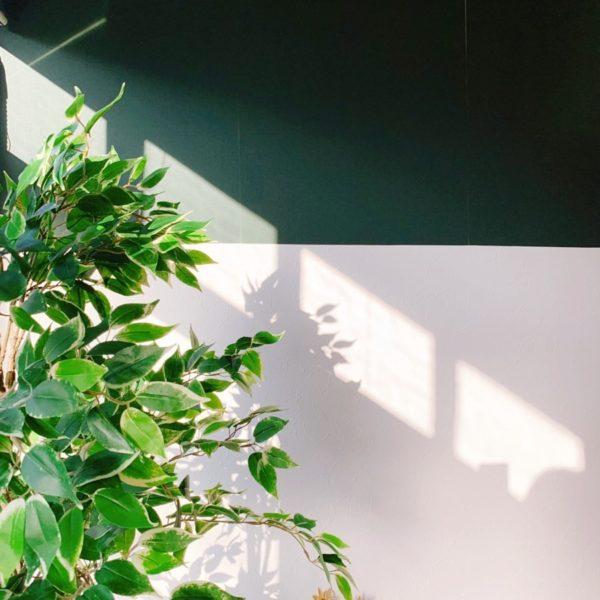 フレーバー緑茶専門店フレーバーグリーンのバレンシアオレンジフレーバー緑茶